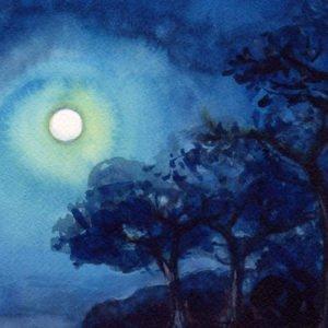 paesaggio notturno con alberi di Luca Sanna